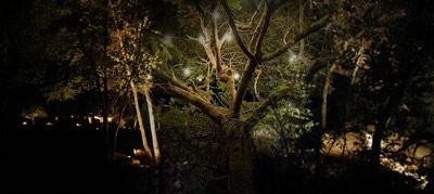 Nazomernachtlicht
